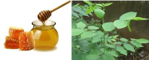 cách chữa nhiệt miệng bằng rau ngót