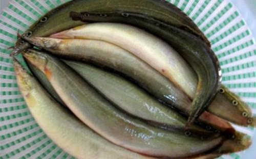 cá chạch
