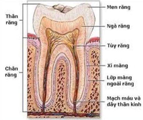 mục đích của việc chữa tủy răng là gì 1