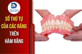 số thứ tự của các răng trên cung hàm