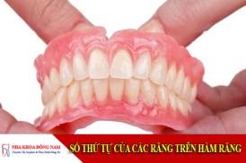 số thứ tự của các răng trên hàm răng