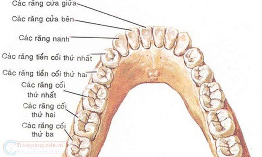 phương pháp trồng răng cấm có đau không 1