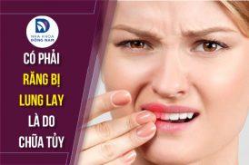 Có phải răng bị lung lay là do chửa tủy
