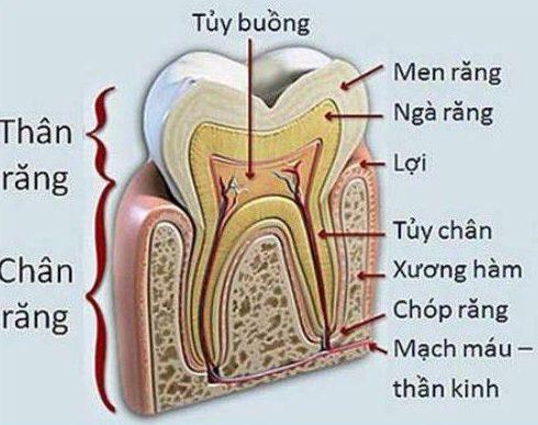 vì sao nên bọc răng sứ cho răng đã lấy tủy 1