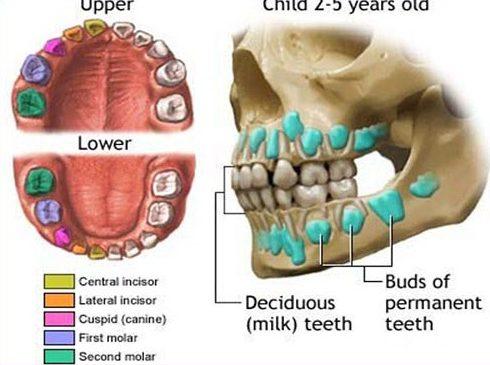 bảng giá nhổ răng sữa tại nha khoa đông nam 2