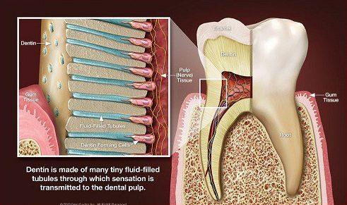 Các loại thuốc và kem đánh răng trị ê buốt hiện nay 1