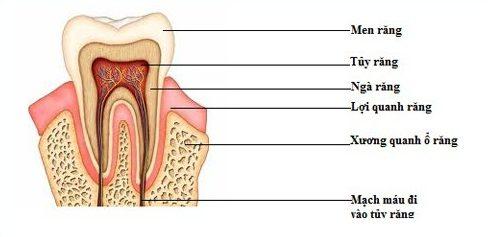 men răng là gì? cách phục hồi lại men răng bằng nhiều phương pháp 1