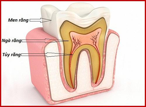 các chức năng của răng là gì? có nên nhổ hết làm lại không?1