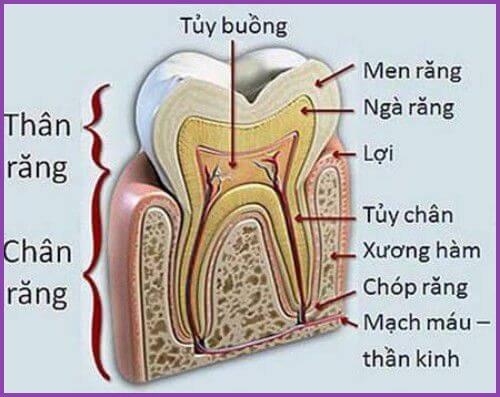 Lấy tủy răng bao nhiêu lần mới hoàn tất 2