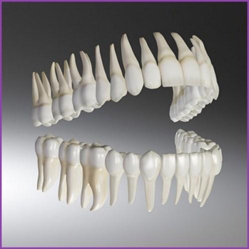 Tại sao giá điều trị tủy răng khác nhau giữa các vị trí trên khung hàm 4