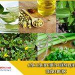 các cách chữa viêm lợi bằng thảo dược 6