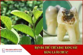 chữa đau răng sâu bằng lá ổi