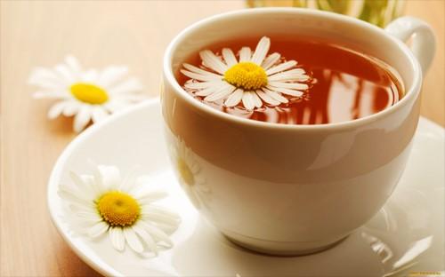 trà hoa cúc chữa viêm lợi