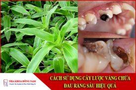 cách sử dụng cây lược vàng chữa đau răng sâu hiệu quả