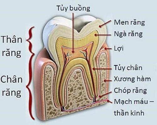 có mấy loại sâu răng