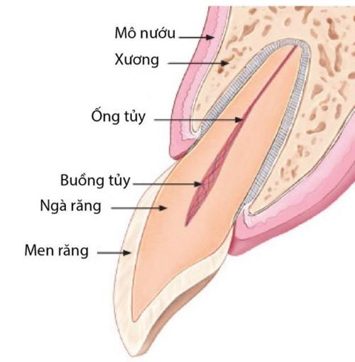 cấu trúc cửa răng cửa