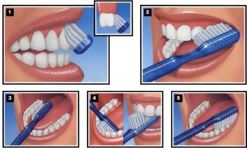 các bước chải răng