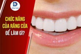 chức năng cửa răng cửa để làm gì