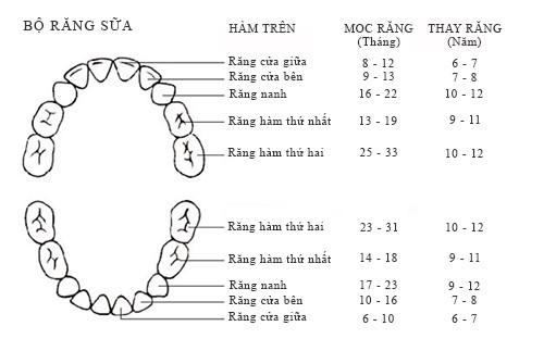 quá trình mọc và thay răng ở trẻ