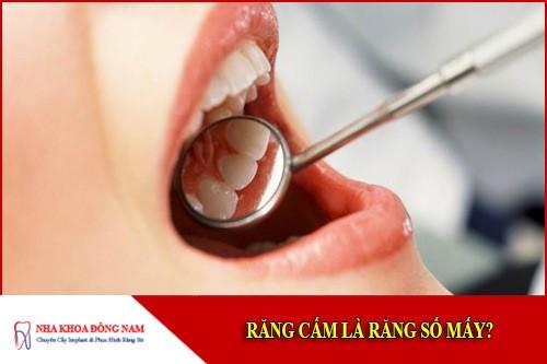 Răng cấm là răng số mấy