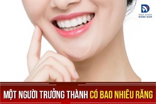 một người trưởng thành có bao nhiêu răng
