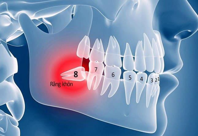 người trưởng thành có bao nhiêu răng